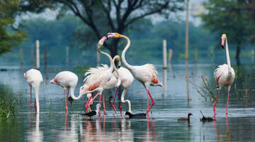 Golden Triangle Tour with Bharatpur 6 Nights 7 Days
